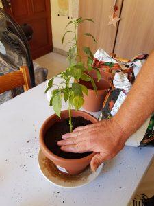 Persona con plantas