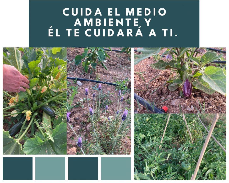 Collague fotos flores